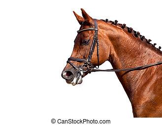 châtaigne, cheval, isolé, blanc