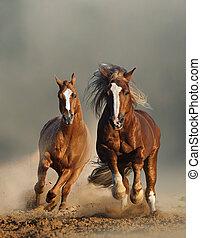 châtaigne, chevaux, deux, devant, sauvage, courant, vue