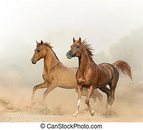 châtaigne, chevaux, deux