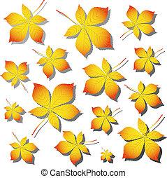 châtaigne, feuilles automne