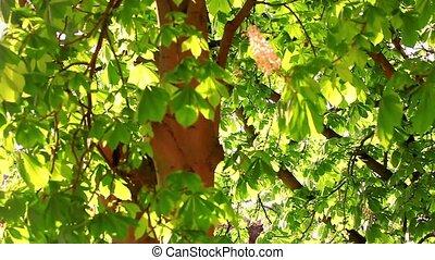 châtaigne, feuilles, pluie