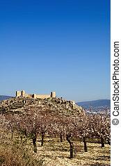 château, amandes, arbre, fleurir, espagnol