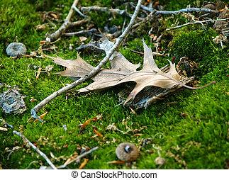 chão floresta, detalhes