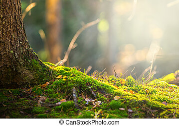 chão floresta, em, outono, com, raio luz