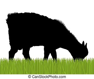 chèvre, silhouette
