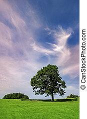 chêne, ancien, magnifique, arbre, champ