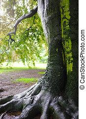 chêne, après, arbre, pluie