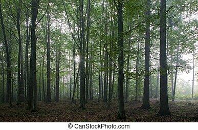 chêne, et, hornbeam, arbres, contre, lumière, de, matin