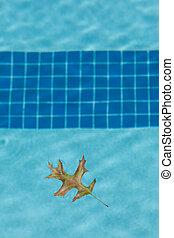chêne, feuille flottante, piscine