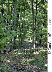 chêne, forêt, manière