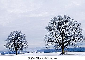 chêne, hiver