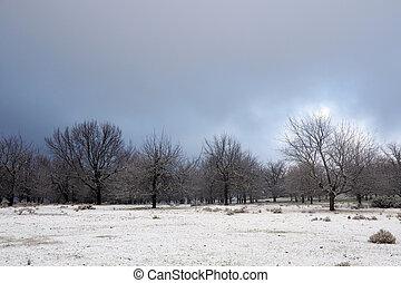 chêne, neige, arbres, hiver