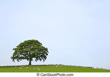 chêne, paysage, arbre