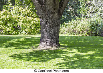 chêne, ville parc, vieil arbre