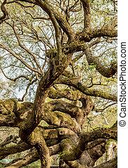 chêne, vivant, branches, glissement, arbre