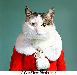 chłodny, samiec, kot, w, gwiazdor, część garderoby, płaszcz