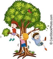 chłopcy, drzewo, trzy, wspinaczkowy