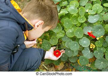 chłopiec, jego, ręka, kwiat, dzierżawa, czerwony