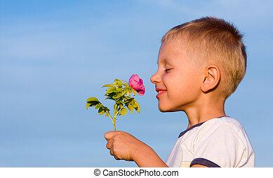 chłopiec, pachnący, róża, kwiat
