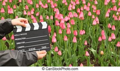 chłopiec, tulipany, pole, siła robocza, klepie, clapperboard