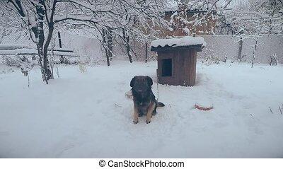 chaîne, neige, chien, appareil photo, devant, métis