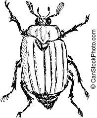 chafer - hand drawn, doodle, sketch illustration of chafer