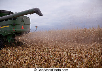 Chaff blowing out of a combine harvester - Chaff blowing out...