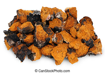 Chaga - birch mushroom. Chopped dried slices on white...