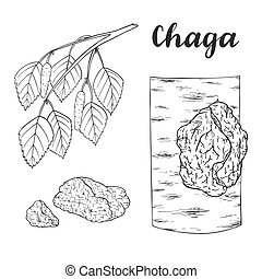 Chaga mushroom (Inonotus obliquus) set. - Chaga mushroom...
