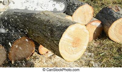 chainsaw blade cutting log of wood