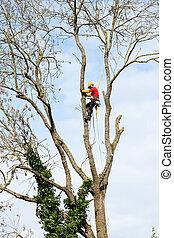 chainsaw, corte, árvore, arborist