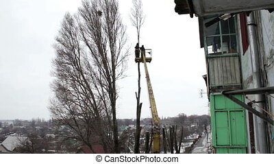 Chainsaw Cut Down a Tree in the City