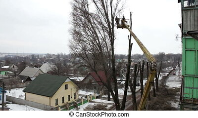 Chainsaw Cut Down a Tree in the City - Communal workers in...