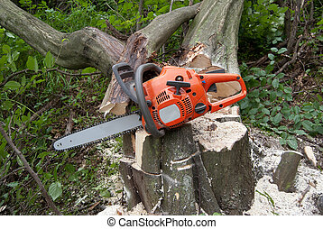 chainsaw stump - chainsaw on the stump of the clipped tree