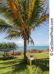 Chair underneeth a palm tree with view over the ocean - the best place to have a quick break