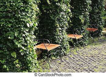Chairs in a park filled with green leaves