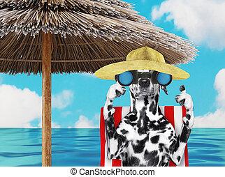 chaise, render, chien, bains de soleil, 3d, binoculars., dalmatien, par, plage, regarder