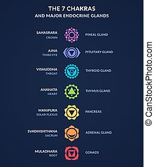 Infographic on body Chakras and corresponding endocrine system glands in human anatomy. Modern flat geometric style chakra icons.