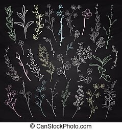 Chalk Drawing Herbs, Plants and Flowers. Vector Illustration