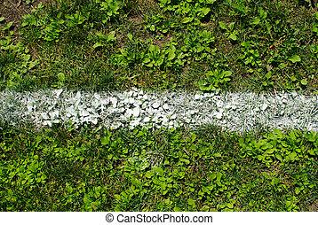 Chalk line marking on grass