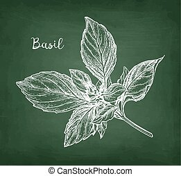 Chalk sketch of basil