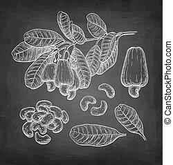 Chalk sketch of cashew