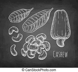 Chalk sketch of cashew - Cashew set. Chalk sketch of nuts on...