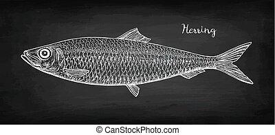 Chalk sketch of herring. - Chalk sketch of herring on...