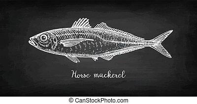 Chalk sketch of horse mackerel on blackboard background. Hand drawn vector illustration of fish. Retro style.