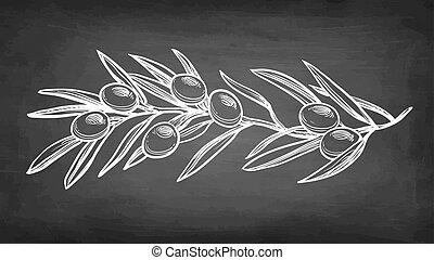 Chalk sketch of olive branch. - Chalk sketch of olive branch...