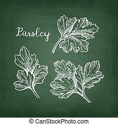 Chalk sketch of parsley