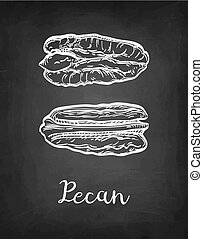 Chalk sketch of pecan - Pecan. Chalk sketch of nuts on...