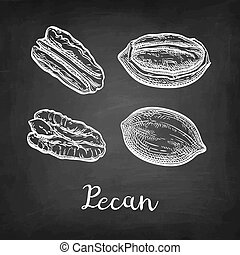 Chalk sketch of pecan - Pecan set. Chalk sketch of nuts on...