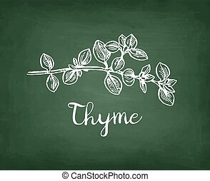 Chalk sketch of thyme